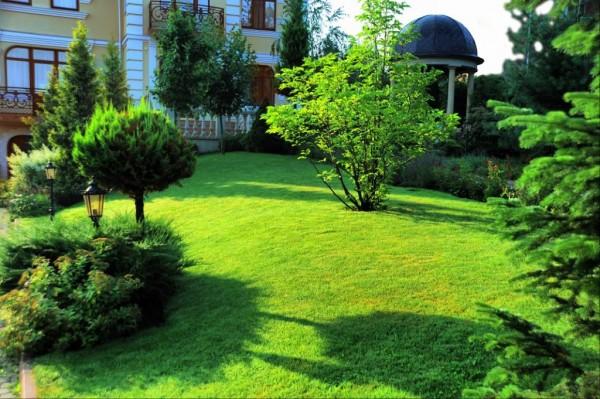 газон на придомовом участке