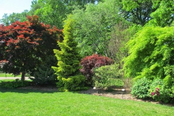 деревья и кусты в саду