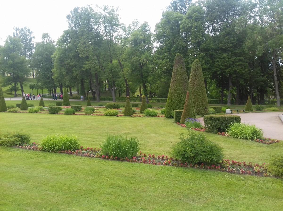 Благоустройство газона от 50 руб м2