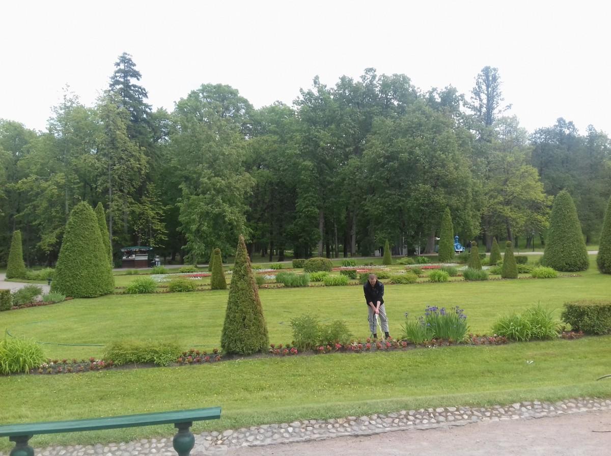 Высадка цветов и деревьев от 100 руб шт.